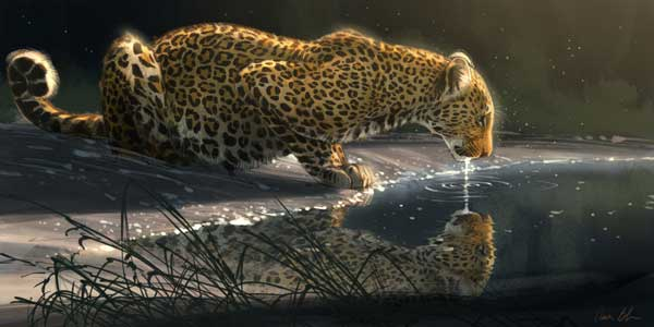 aaronblaise-leopard-drinking-from-pool