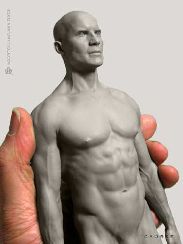 anatomy tools male figure in grey torso and head