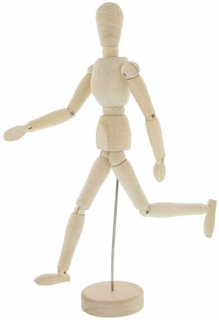 anatomy teaching tools - wooden manakin