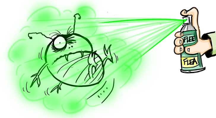 illustrating blog posts flea spray
