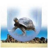 john-leben-tortoise