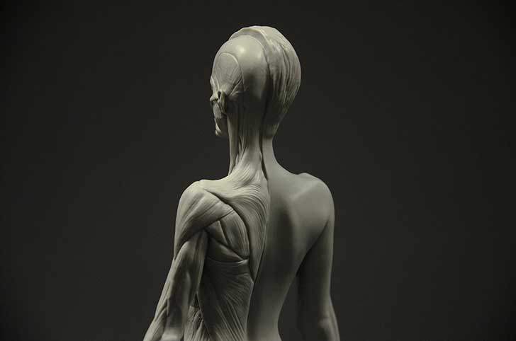 female anatomy figure with muscle detail in greay