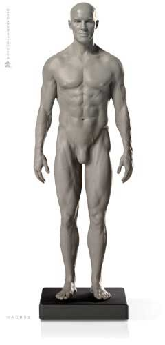 anatomy tools model male in grey